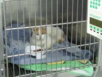 hospitalizacion gatos Mallorca