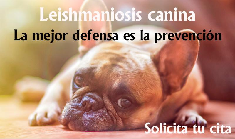 Vacuna contra la Leishmaniosis Canina