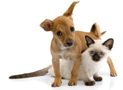 reproduccion asistida perros y gatos mallorca